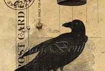 I like Crows