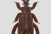 Nos Collections - Entomologie