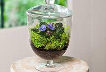 Botanic Design / Bitkiler ve yaratıcılığın buluştuğu nokta...