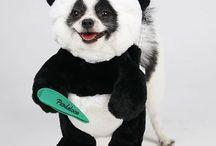 Pandaloon Costumes