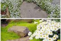 Plants for paving