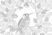 omalovánky ptáci