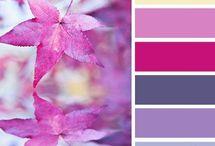 Colour Palletes