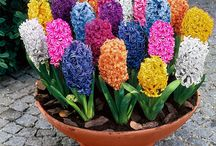 цветы / мир цветов