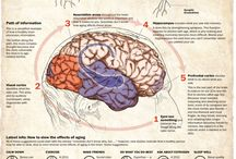 Neurology / Dr. Bruno Gallo's Neurology Related Board / by Dr. Bruno Gallo