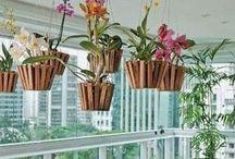 Boutique Garden orquideas