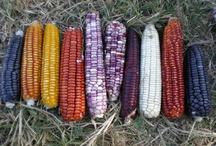 Corn..