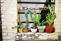 CactUs & co / Gardening fat plants cactus flowers