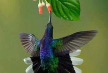 Uccelliniuccellacci...