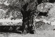Atlante Italiano | Photography / Atlante Italiano | Todi - Umbria |  Photo by George Tatge © Linfen Tree, 2003