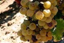 Vins blancs doux de Bordeaux