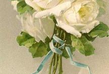 Rose / Bloemen