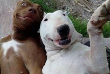 dog&friends selfies