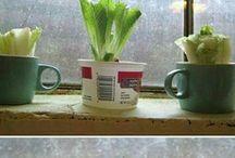 Garden vegetables etc