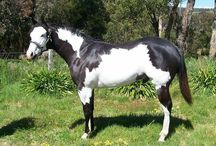 OVERO FRAME and strange painted horses
