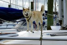 Boat Dogs / Some day we hope to adopt another pup to add to our crew but, until then, here are some awesome boat dogs (our Sally included!).