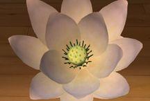 Lotos / Wodna roślina wieloletnia, do złudzenia przypominająca grzybienie. Kwiaty wzniesione i pachnące. Wystają ponad powierzchnię wody, gdyż umiejscowione są na długich szypułkach.