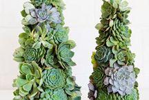 Cactus & Co.