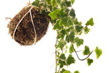 kokes colgantes (o string garden)
