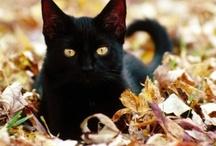 *Cats* / by Nicole Helbert