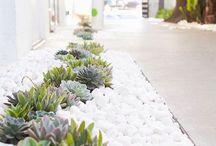 Ogród rośliny
