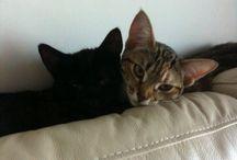 Cray Cray Kitties / My two cats & other feline stuff