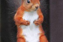 veverițe drăguțe