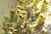Colourful and Interesting Insects