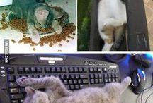 Сумасшедшие кошки