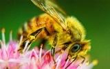 back yard beauty-bees-butterflies-frogs