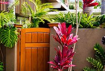 Tropical Garden Ideas