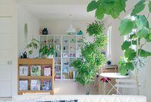 緑 / Green airplants エアプランツ ウンベラータ  ユーカリ ポポラス 多肉 観葉植物 植物 plants