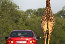 Amazing Kruger National Park