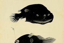 tats refs fish peixe