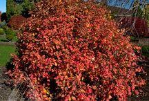 Great Autumn Color!