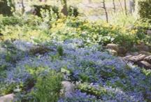 Garden - Åbrolla