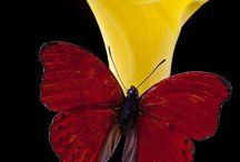 un bellissimo fiore