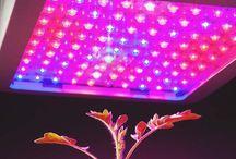 LED GROW LIGHTS SPRCS