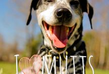 Mutts  / by Whitaker Rehm