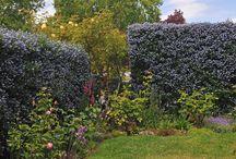 Flowering shrubs for clay soils