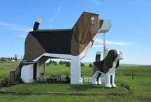 Arquitectura Animal