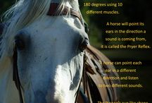Interesting Facts Aout Horses