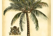 French Colonial Tropical Home Interior Mood Board