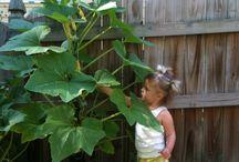 Gardening Tips for vegetables