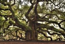 trees / by Nicholas Deleon