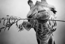 Animal Cuteness!