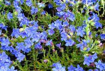 fleurs jardin terrasse