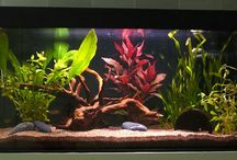For the fish  / Fish tank, fresh water fish