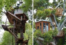 home amongst the trees / Tree houses and other tree life.
