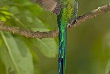 Hummingbirds <3